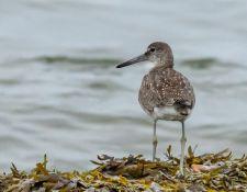 web-Trull-RR-bird-walk-by-Gerry-Beetham-12Aug2021-48