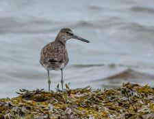 web-Trull-RR-bird-walk-by-Gerry-Beetham-12Aug2021-49