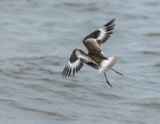 web-Trull-RR-bird-walk-by-Gerry-Beetham-12Aug2021-50