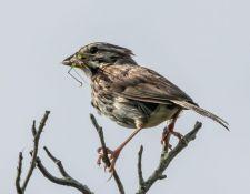 web-Trull-RR-bird-walk-by-Gerry-Beetham-12Aug2021-53