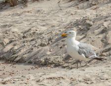 web-Trull-RR-bird-walk-by-Gerry-Beetham-12Aug2021-54