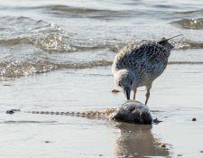 web-Trull-RR-bird-walk-by-Gerry-Beetham-17Aug2021-11
