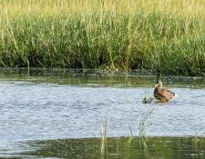 web-Trull-RR-bird-walk-by-Gerry-Beetham-17Aug2021-13