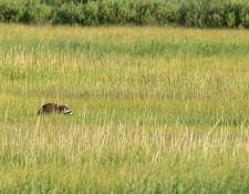 web-Trull-RR-bird-walk-by-Gerry-Beetham-17Aug2021-15