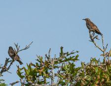 web-Trull-RR-bird-walk-by-Gerry-Beetham-17Aug2021-17