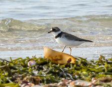 web-Trull-RR-bird-walk-by-Gerry-Beetham-17Aug2021-18