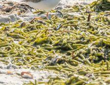 web-Trull-RR-bird-walk-by-Gerry-Beetham-17Aug2021-19