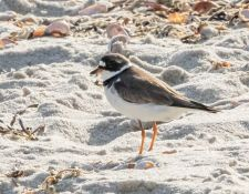 web-Trull-RR-bird-walk-by-Gerry-Beetham-17Aug2021-20
