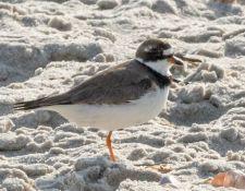 web-Trull-RR-bird-walk-by-Gerry-Beetham-17Aug2021-21