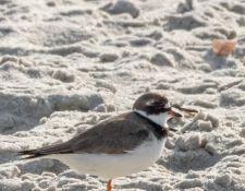 web-Trull-RR-bird-walk-by-Gerry-Beetham-17Aug2021-22
