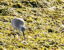 web-Trull-RR-bird-walk-by-Gerry-Beetham-17Aug2021-23