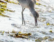web-Trull-RR-bird-walk-by-Gerry-Beetham-17Aug2021-24