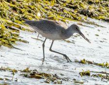 web-Trull-RR-bird-walk-by-Gerry-Beetham-17Aug2021-25