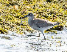 web-Trull-RR-bird-walk-by-Gerry-Beetham-17Aug2021-26