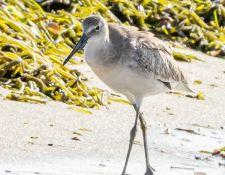 web-Trull-RR-bird-walk-by-Gerry-Beetham-17Aug2021-27