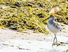 web-Trull-RR-bird-walk-by-Gerry-Beetham-17Aug2021-28
