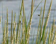 web-Trull-RR-bird-walk-by-Gerry-Beetham-17Aug2021-29