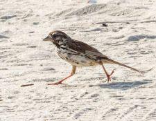 web-Trull-RR-bird-walk-by-Gerry-Beetham-17Aug2021-30
