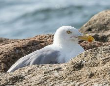 web-Trull-RR-bird-walk-by-Gerry-Beetham-17Aug2021-32
