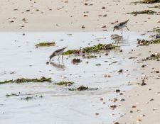 web-Trull-RR-bird-walk-by-Gerry-Beetham-17Aug2021-33