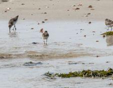 web-Trull-RR-bird-walk-by-Gerry-Beetham-17Aug2021-34