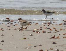 web-Trull-RR-bird-walk-by-Gerry-Beetham-17Aug2021-36