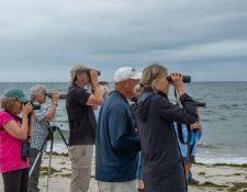 web-Trull-RR-bird-walk-by-Gerry-Beetham-19Aug2021-08
