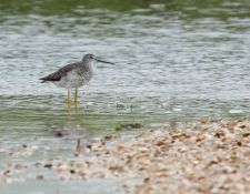 web-Trull-RR-bird-walk-by-Gerry-Beetham-19Aug2021-11