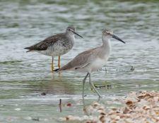 web-Trull-RR-bird-walk-by-Gerry-Beetham-19Aug2021-12
