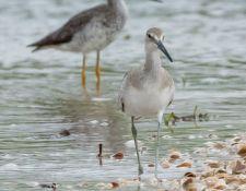 web-Trull-RR-bird-walk-by-Gerry-Beetham-19Aug2021-13