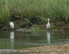 web-Trull-RR-bird-walk-by-Gerry-Beetham-19Aug2021-14