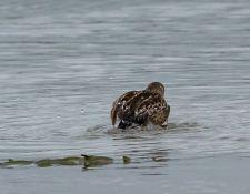 web-Trull-RR-bird-walk-by-Gerry-Beetham-19Aug2021-15