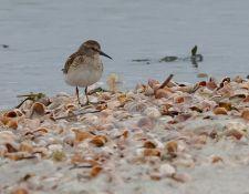 web-Trull-RR-bird-walk-by-Gerry-Beetham-19Aug2021-16