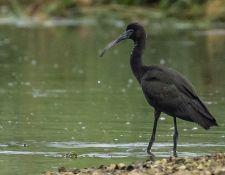 web-Trull-RR-bird-walk-by-Gerry-Beetham-19Aug2021-19