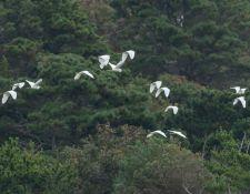 web-Trull-RR-bird-walk-by-Gerry-Beetham-19Aug2021-20