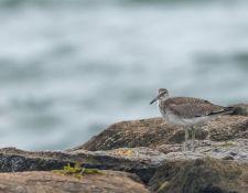 web-Trull-RR-bird-walk-by-Gerry-Beetham-19Aug2021-21