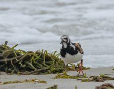 web-Trull-RR-bird-walk-by-Gerry-Beetham-19Aug2021-22