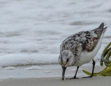 web-Trull-RR-bird-walk-by-Gerry-Beetham-19Aug2021-23