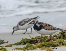 web-Trull-RR-bird-walk-by-Gerry-Beetham-19Aug2021-24