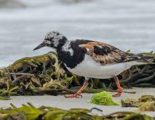 web-Trull-RR-bird-walk-by-Gerry-Beetham-19Aug2021-25