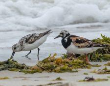 web-Trull-RR-bird-walk-by-Gerry-Beetham-19Aug2021-26