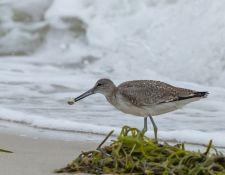 web-Trull-RR-bird-walk-by-Gerry-Beetham-19Aug2021-28