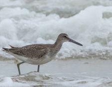 web-Trull-RR-bird-walk-by-Gerry-Beetham-19Aug2021-29