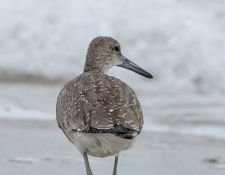 web-Trull-RR-bird-walk-by-Gerry-Beetham-19Aug2021-31