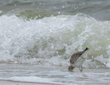 web-Trull-RR-bird-walk-by-Gerry-Beetham-19Aug2021-32