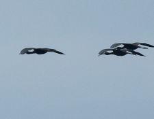 web-Trull-RR-bird-walk-by-Gerry-Beetham-19Aug2021-34