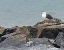 web-Trull-RR-bird-walk-by-Gerry-Beetham-19Aug2021-37