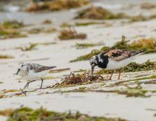 web-Trull-RR-bird-walk-by-Gerry-Beetham-19Aug2021-38