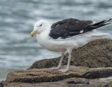 web-Trull-RR-bird-walk-by-Gerry-Beetham-19Aug2021-41