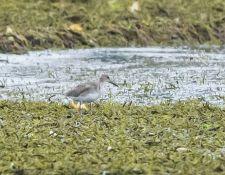 web-Trull-RR-bird-walk-by-Gerry-Beetham-24Aug2021-11